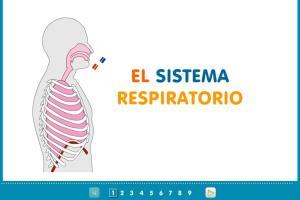 Sistema respiratòri